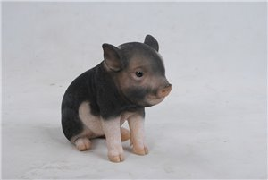 Sitting Baby Pig  Dark Brown, 7 and 5 Inch x 3 and 5 Inch x 6 Inch